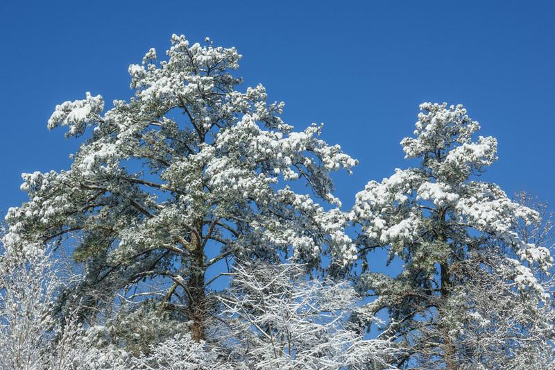 Georgia Snow 004