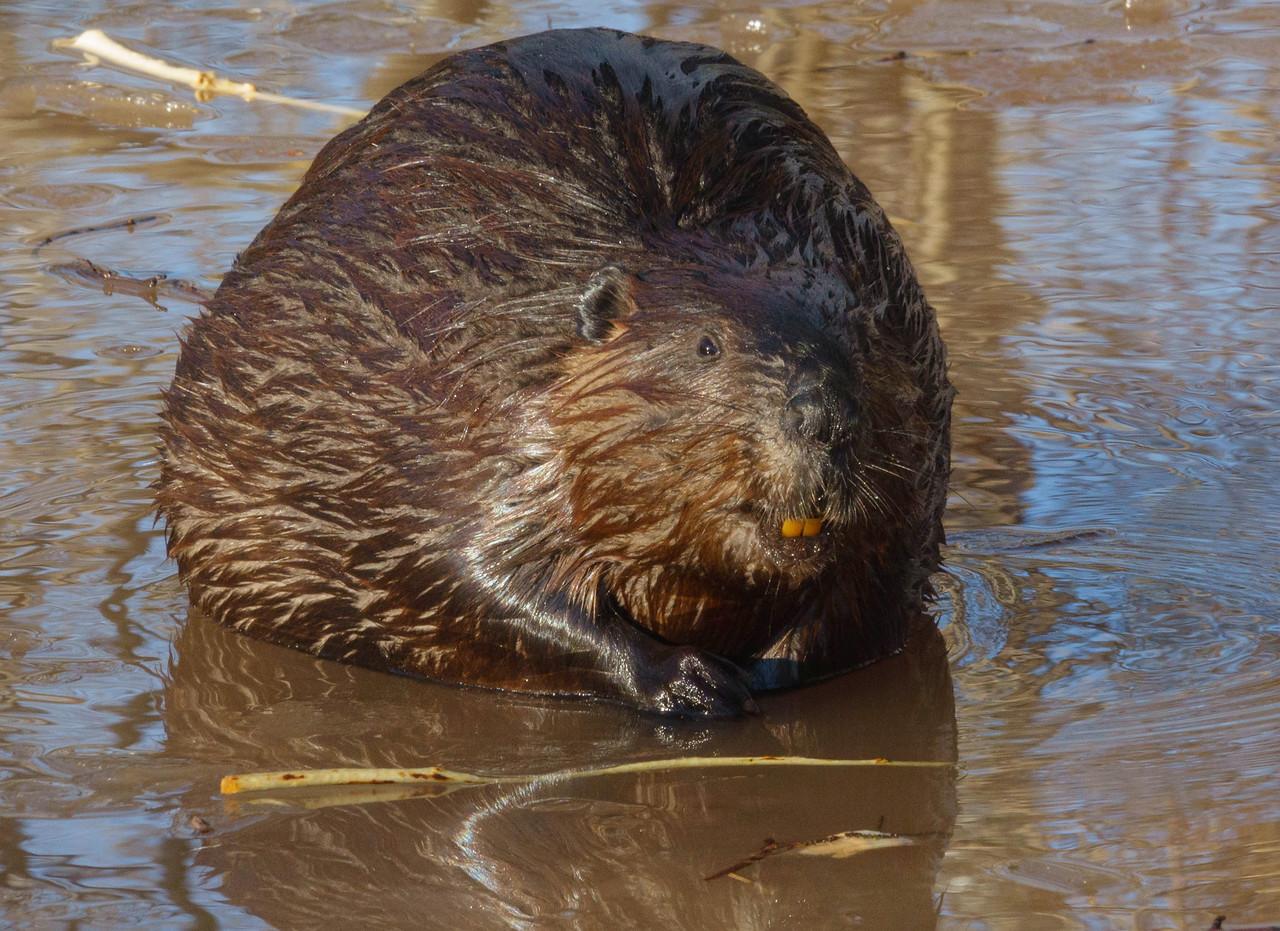 Beaver Pond 004