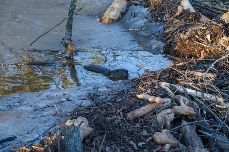 Beaver Pond 002