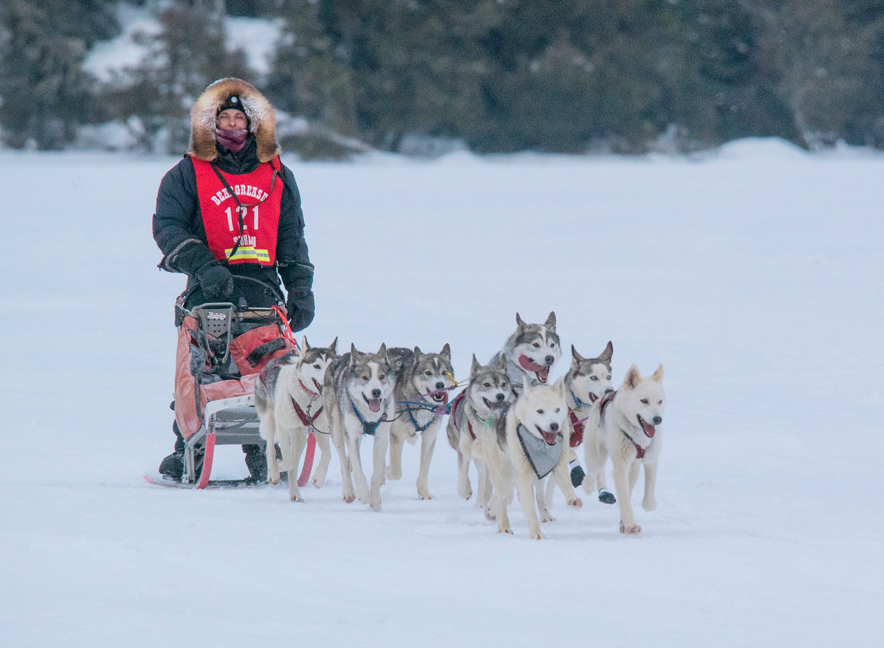 John Beargrease Sled Dog Marathon 004