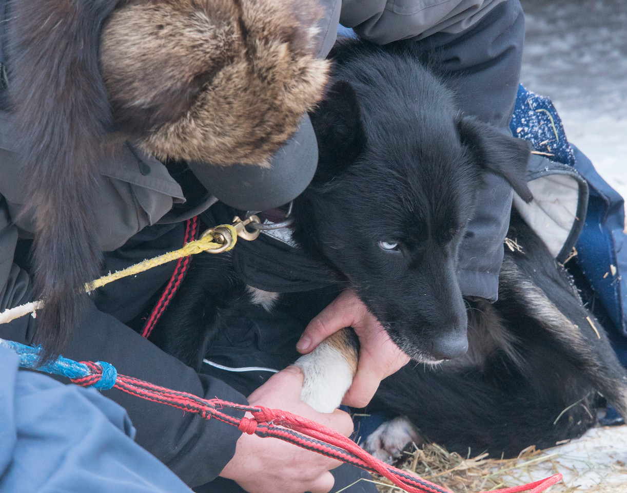 John Beargrease Sled Dog Marathon 007