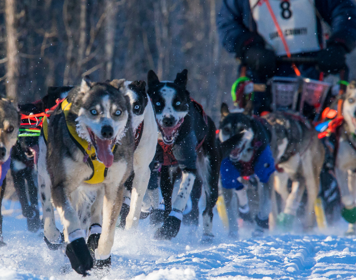 John Beargrease Sled Dog Marathon 003