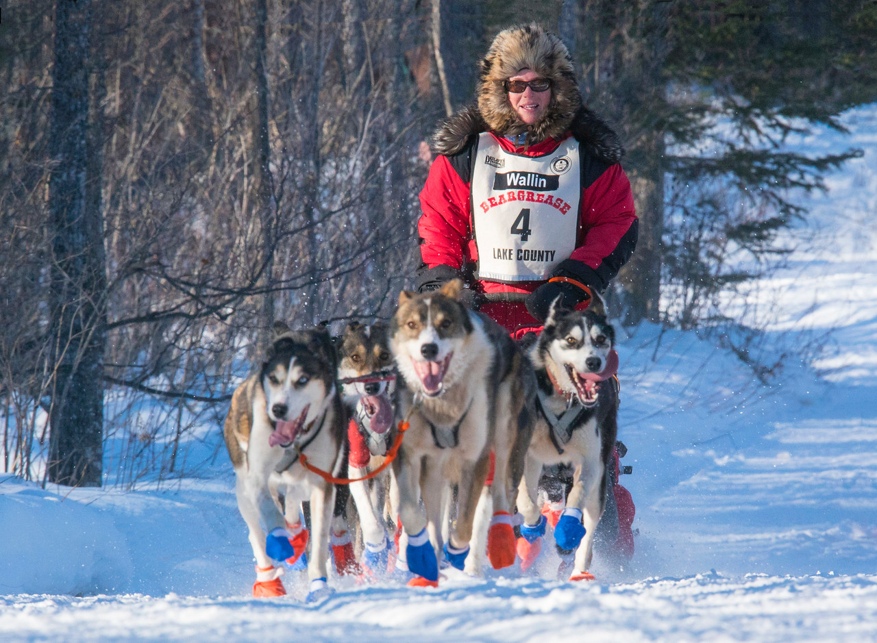 John Beargrease Sled Dog Marathon 001