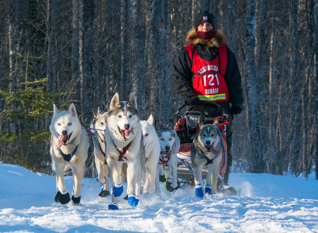 John Beargrease Sled Dog Marathon 002