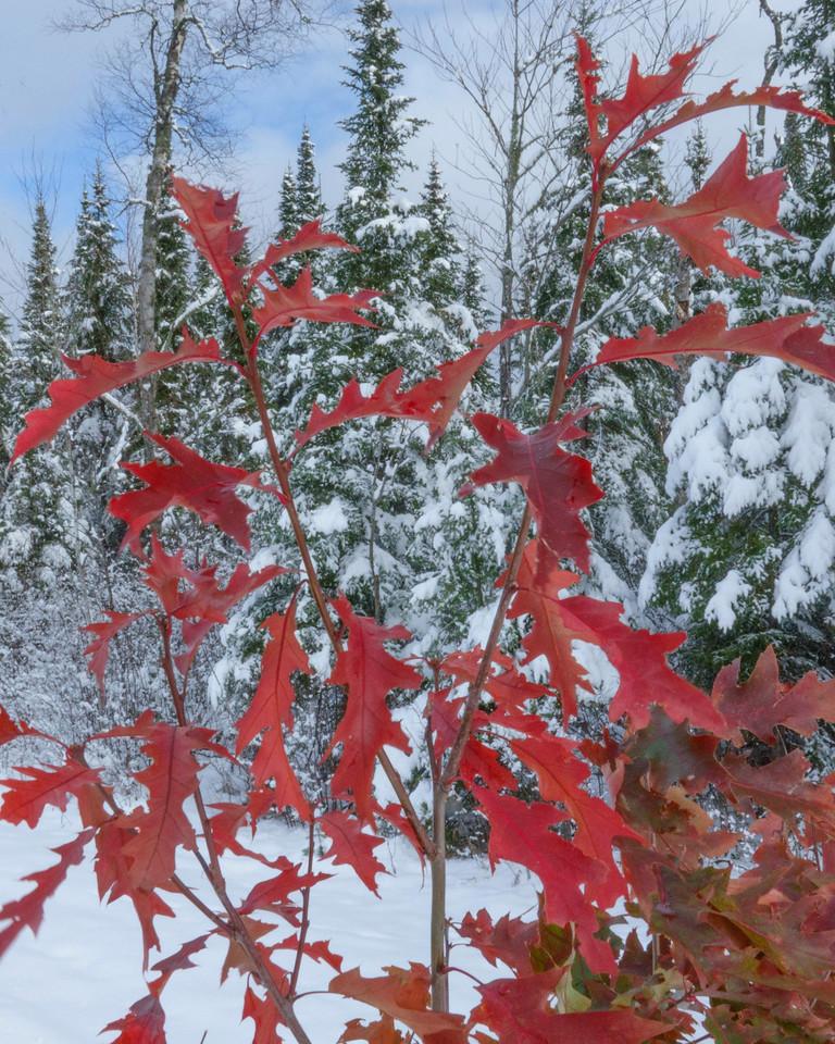 Snow Storm 002