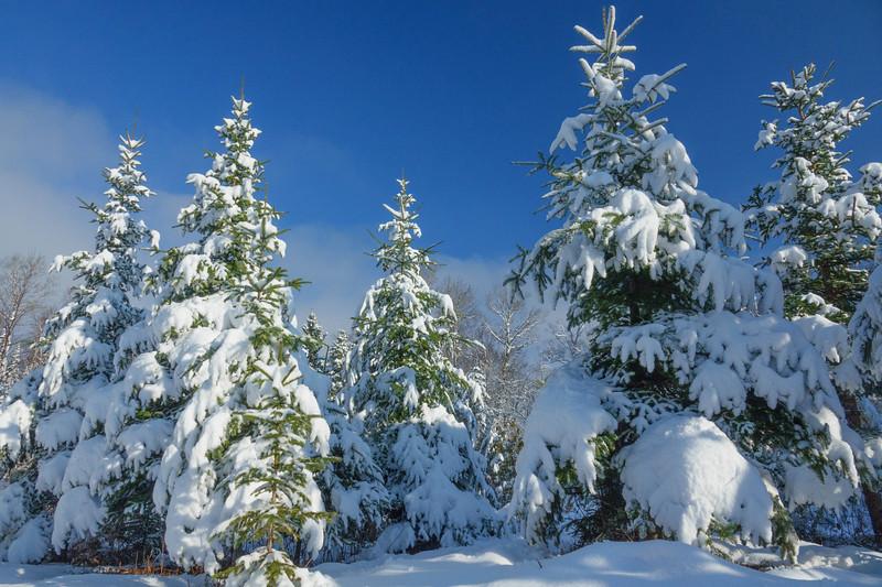 Snow Storm 001