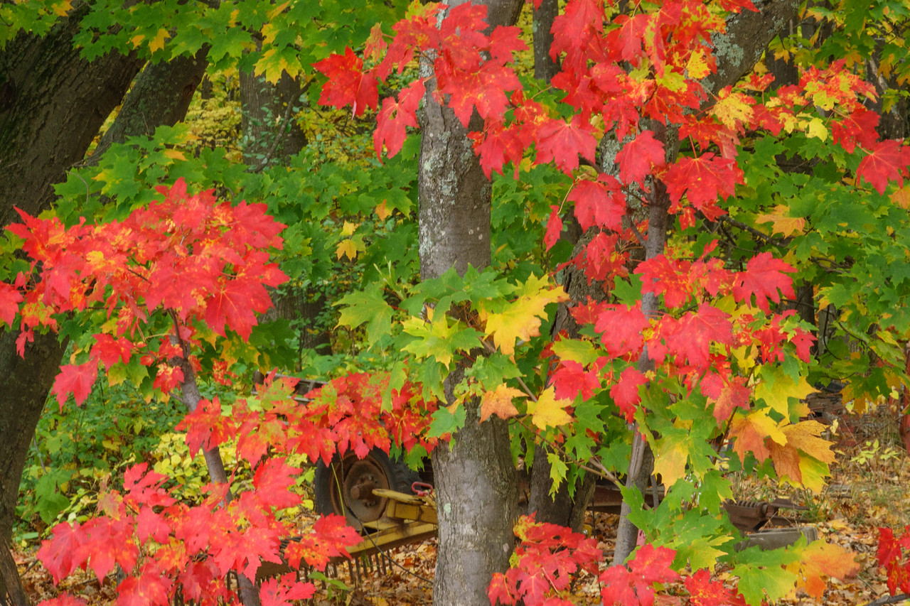 Fall Colors 006