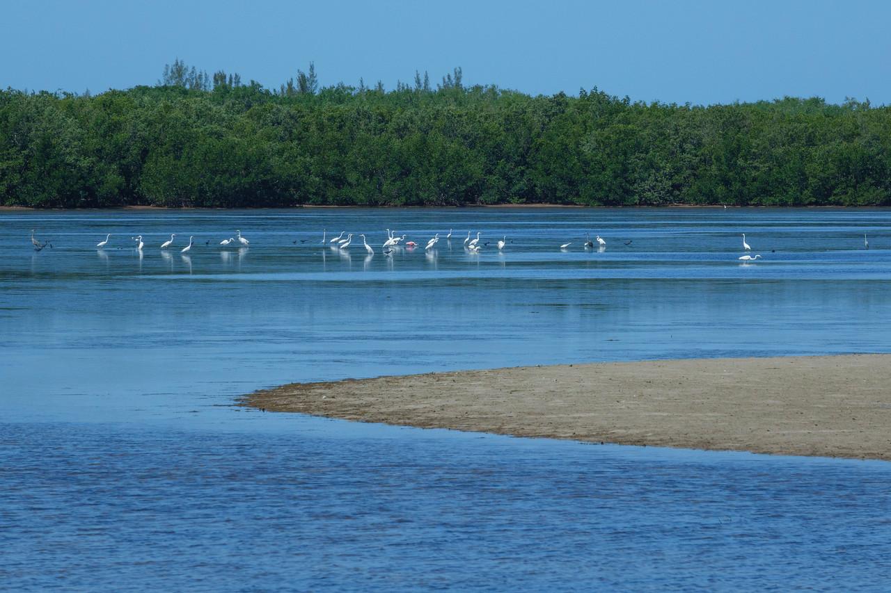 Sanibel Island 005