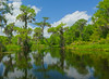 Walkulla Springs State Park 001