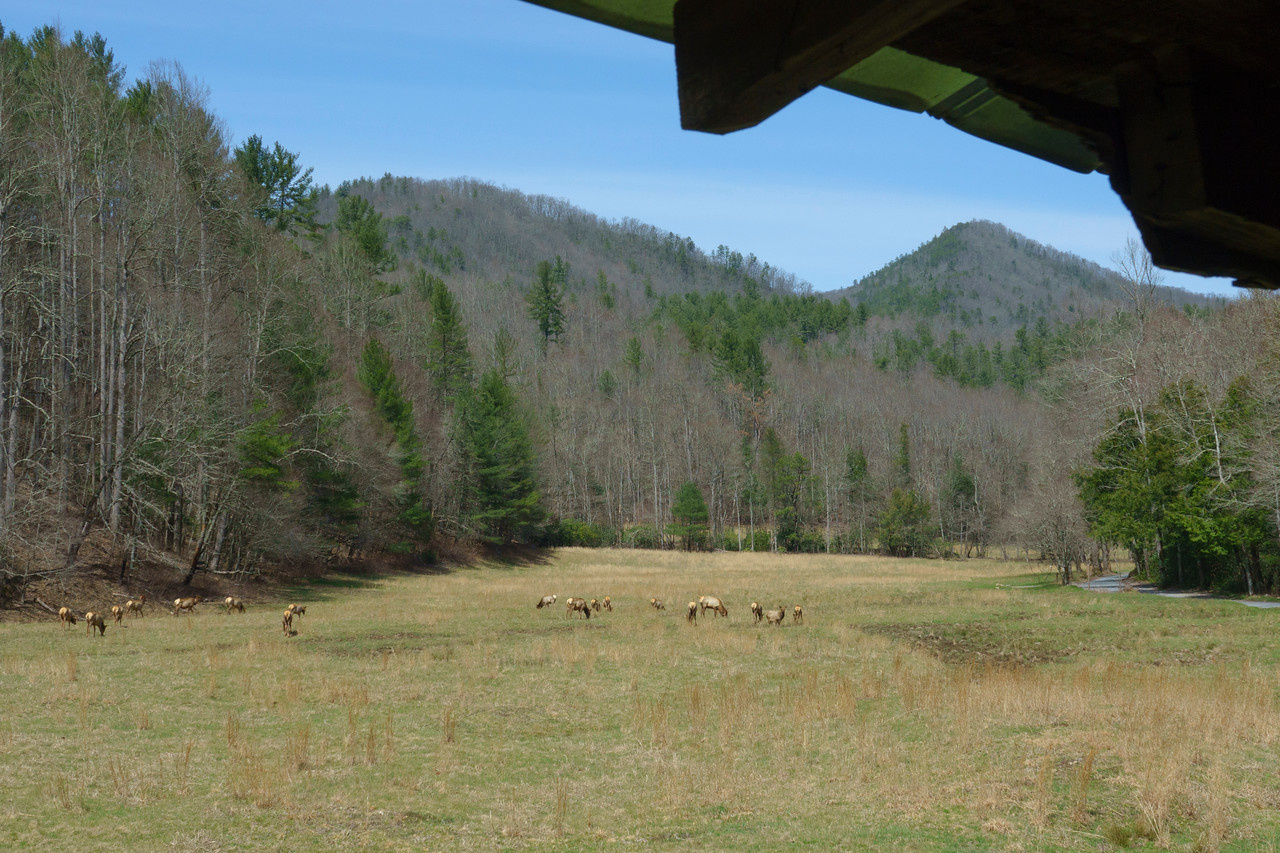 Cataloochee Valley Great Smokey Mountains National Park 001