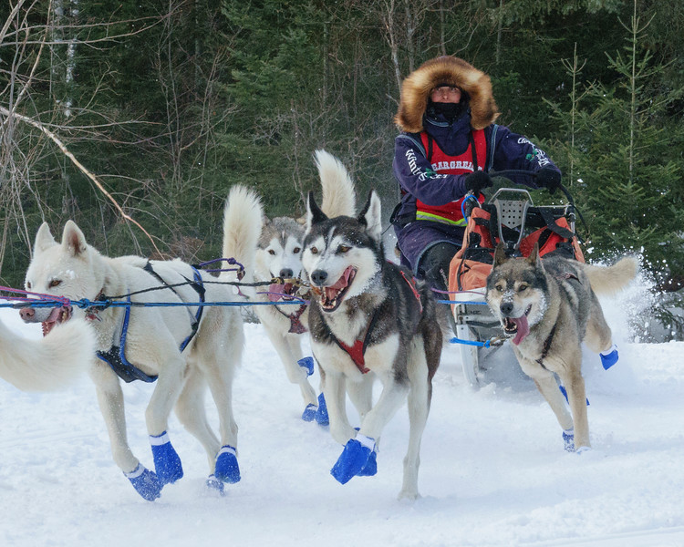 2018 John Beargrease Sled Dog Marathon 002