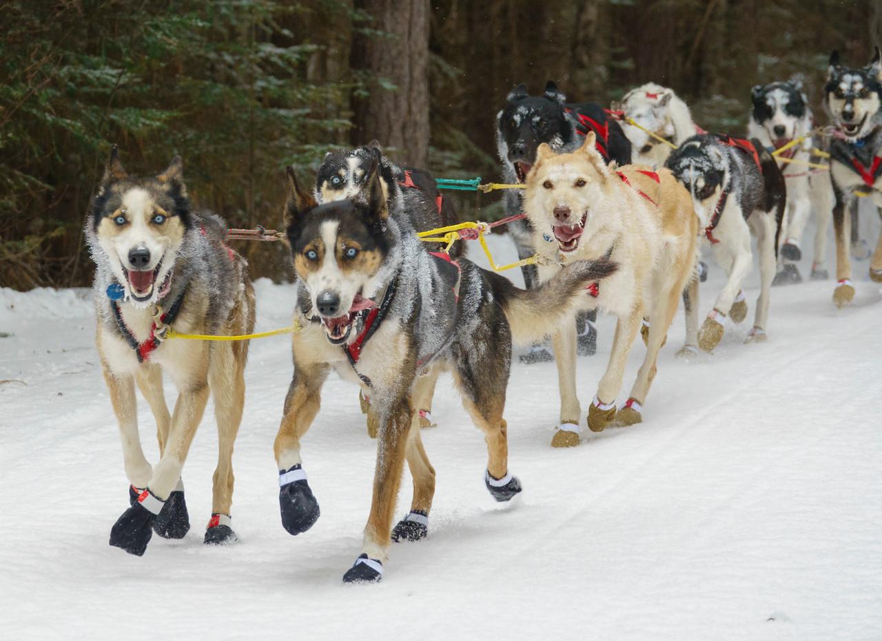 2018 John Beargrease Sled Dog Marathon 004