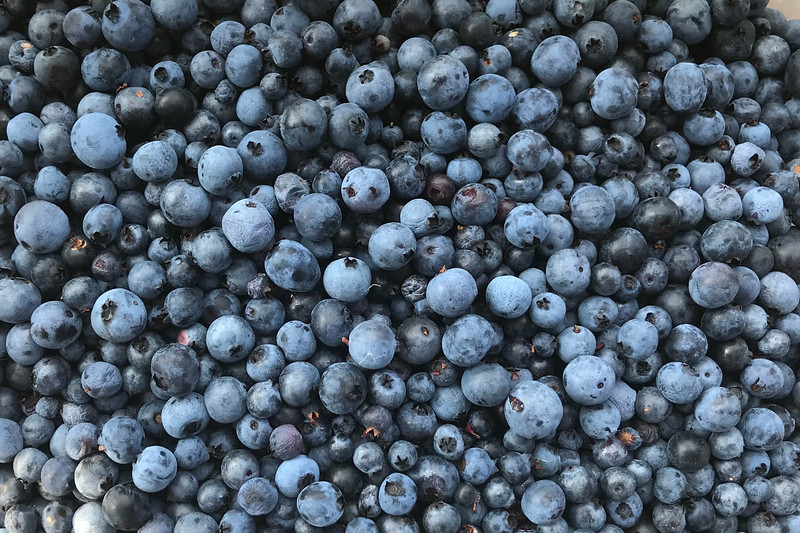 Blueberries 001