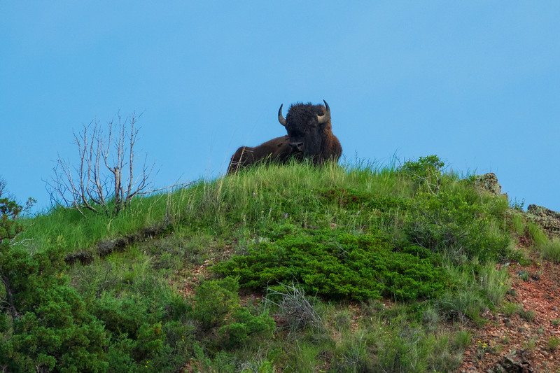 Theodore Roosevelt National Park 008