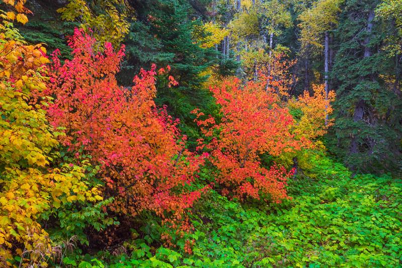 Cascade River State Park 001