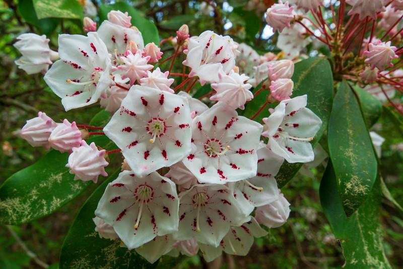Georgia Flowers 003