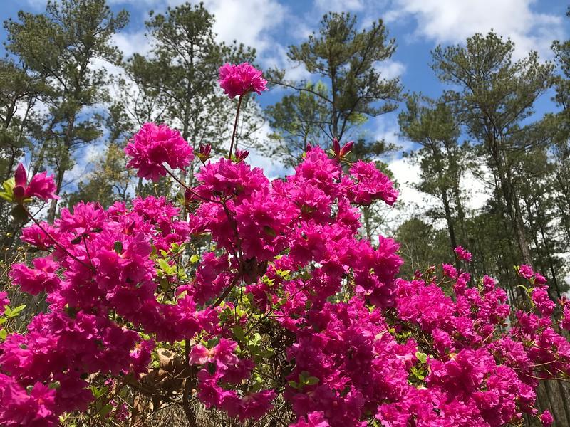 Georgia Flowers 004