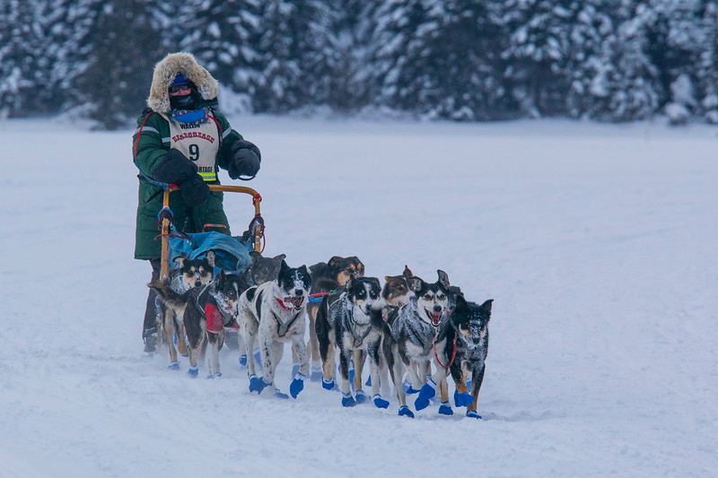 35th John Beargrease Sled Dog Marathon 002