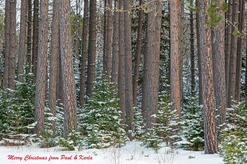 George Washington Pines