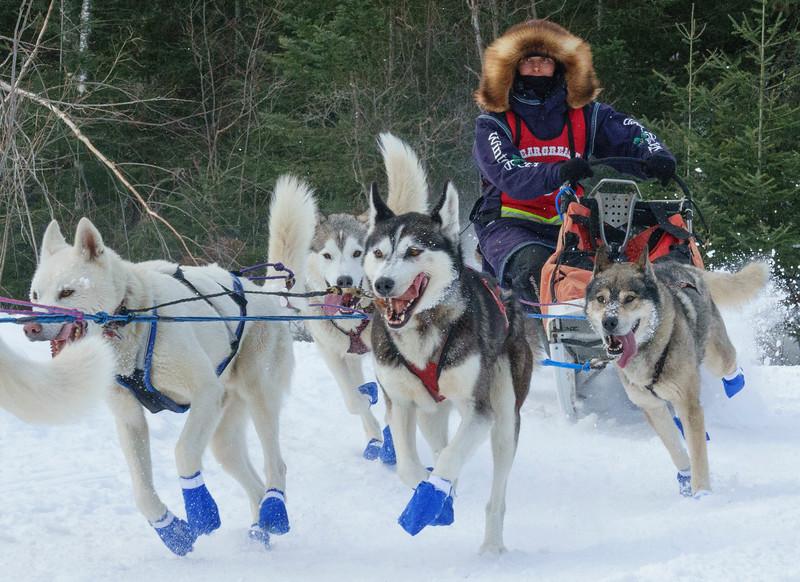 John Beargrease Sled Dog Marathon 005