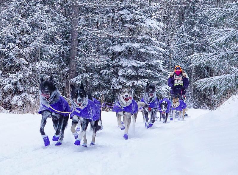 John Beargrease Sled Dog Marathon 010