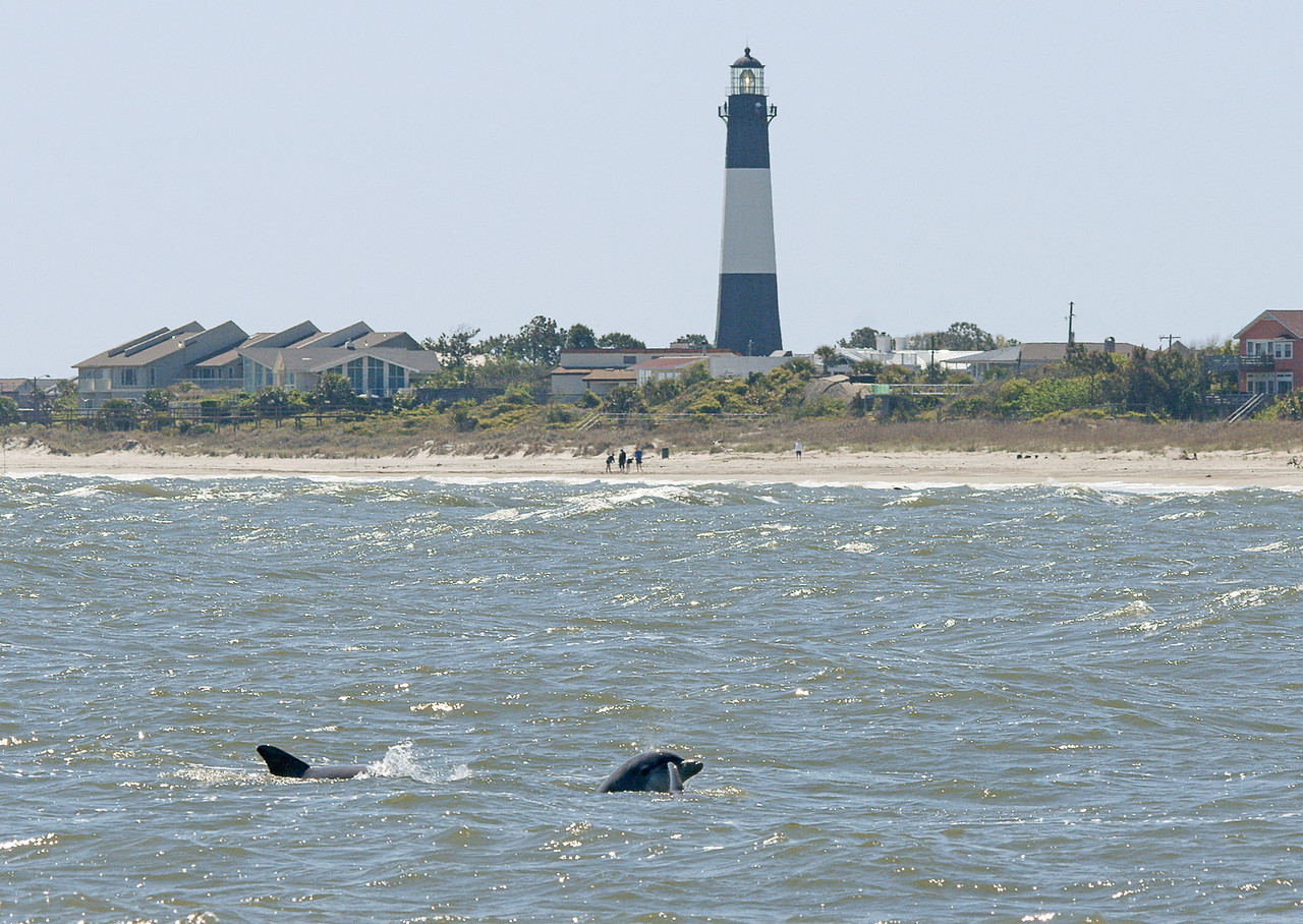 Tybee Island Light<br /> <br /> We watched numerous birds along with about 20 bottlenose dolphins that played a short distance off the beach.