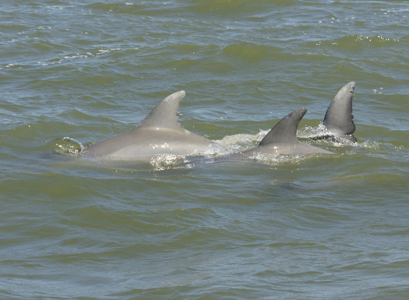 Dolphins 002