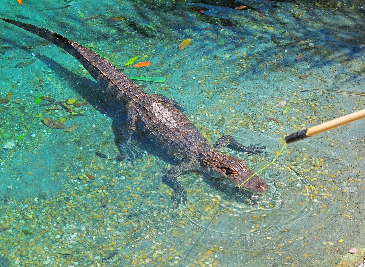 We even fed the aligators