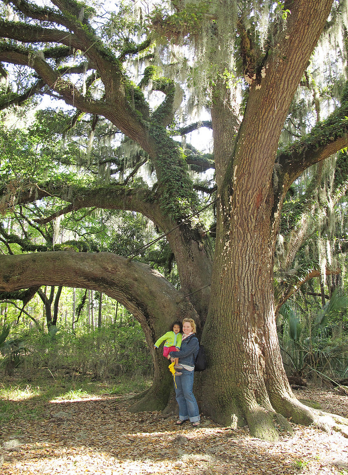 300 Year Old Oak<br /> <br /> One of which was thought to be 300 years old.