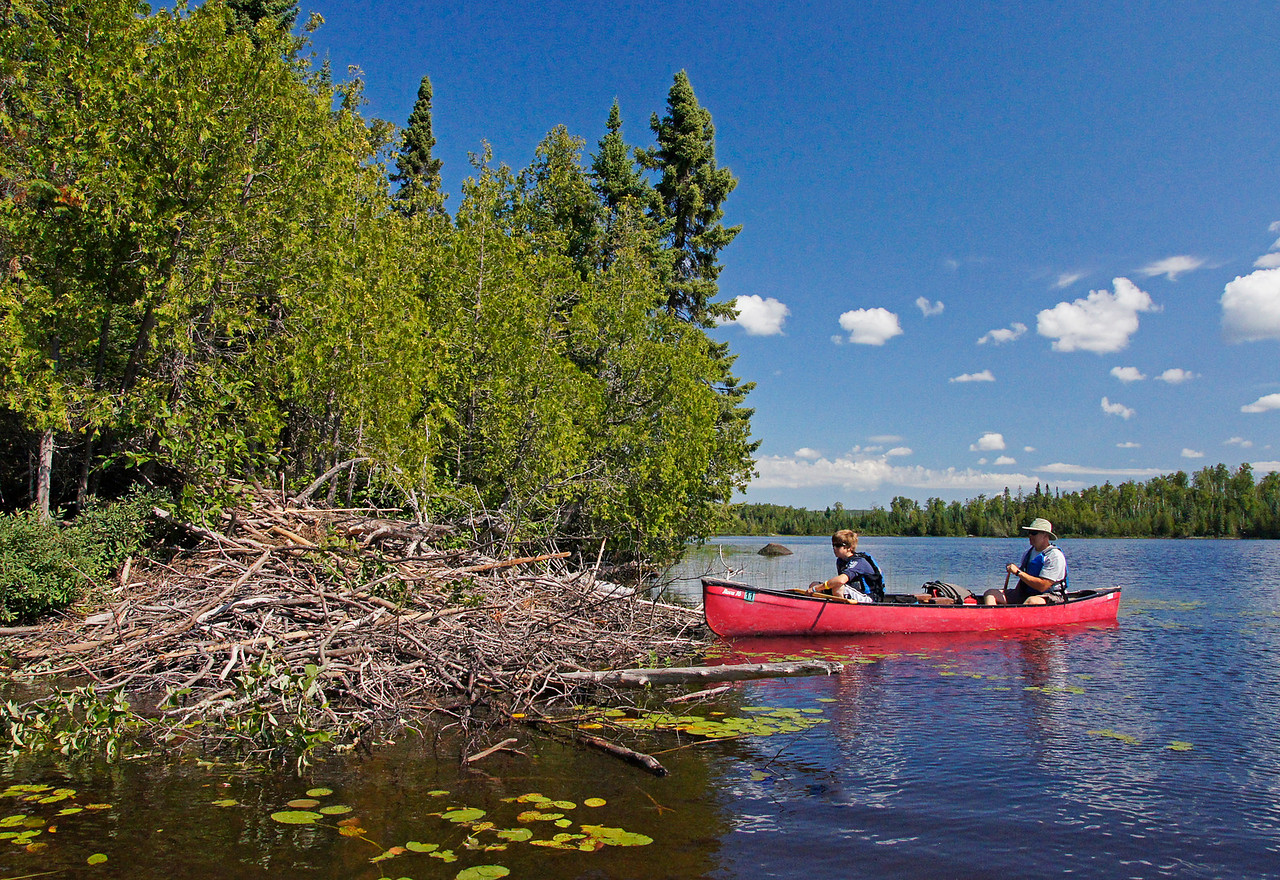 Beaver Lodge<br /> <br /> I always enjoy the look on kid's faces and the excitement they show when they get an opportunity to see this beautiful wilderness for the first time. There is so much to see when you canoe into the BWCAW. Matt hadn't seen a beaver house before so we spent some time exploring a very large newly constructed beaver lodge. Matt couldn't believe how much work the beavers put into constructing their homes.