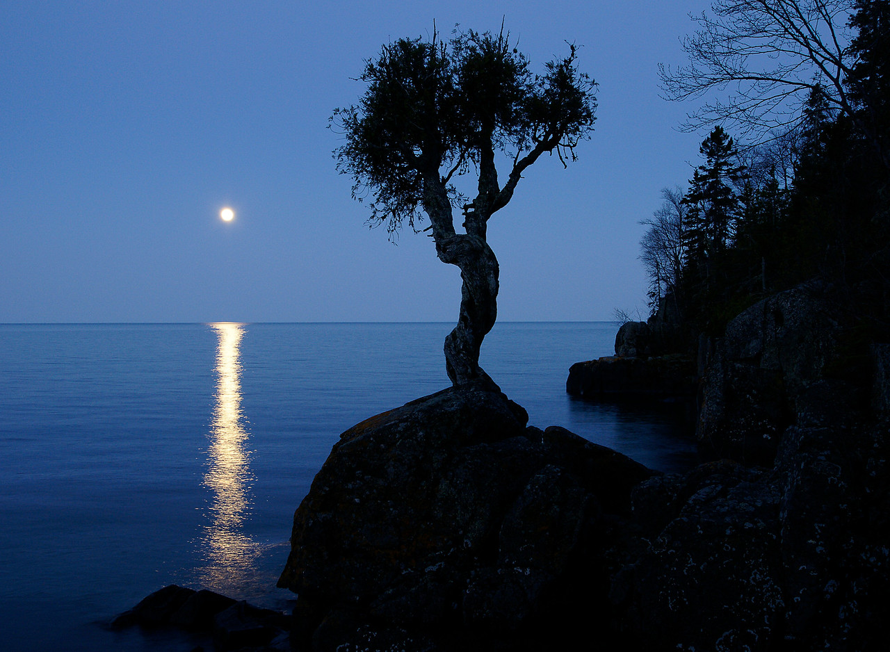May Full Moon Over Little Spirit Cedar Tree 001<br /> <br /> There were two great nights to watch the moon rise over Lake Superior. On Monday night Travis Novitsky, a friend, band member and excellent photographer from Grand Portage took me to photograph the full moon rising behind the Little Spirit Cedar Tree. This ancient white cedar is well over 400 years old. Some of the earliest records of the tree were written by French explorers in 1731. It was a mature tree at that time.