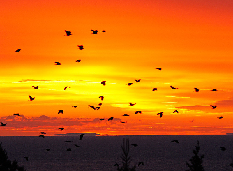 Crow Migration 002<br /> <br /> The numbers were few at first but soon several hundred crows flew past. That is Sand Island in Wisconsin that you see along the horizon.
