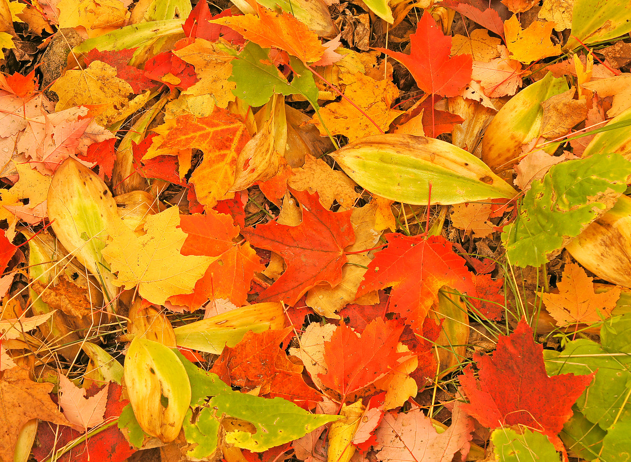 Forest Floor of Leaves