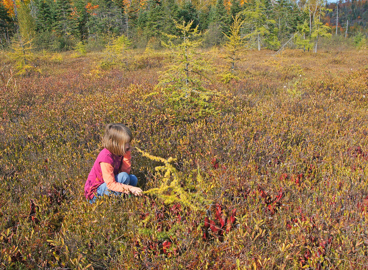 "Floating Bog<br /> <br /> Sometimes you get plants with strange shapes in a floating bog. Here Kate is shaking hands with a Tamarack Tree that seems like it came right out of ""Alice in Wonderland""."