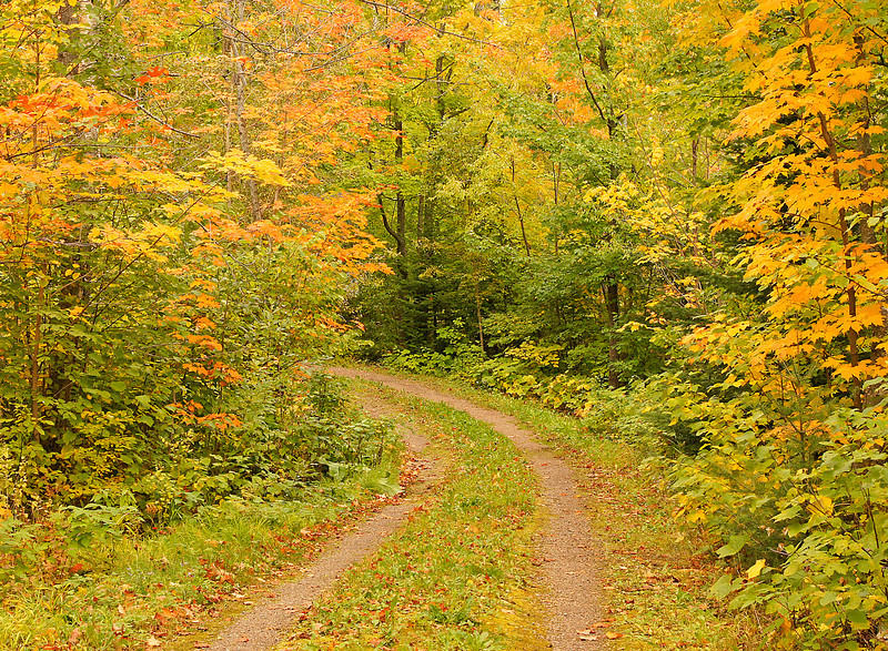 Forest Trail<br /> <br /> This week we are experiencing beautiful weather and it is bringing out the fall colors. The maples have really changed in the last two days.