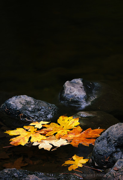 In the Pond<br /> <br /> It is now official.  Autumn is here.  Used a tripod to capture these dead leaves in a calm pool off Mt. Tam in Marin. <br />  <br /> Tip:  In low light, it's almost impossible to get sharp details handheld.  Set your camera on auto-timer, and rest it on anything you can find for much more detailed shots.<br /> <br /> ISO 100, 58mm, f16, 1 second exposure.