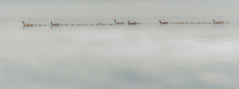 37 Geese on Green Lake