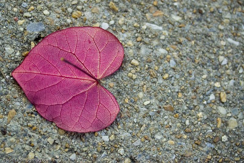 June 09 2008 <br /> <br /> Purple heart