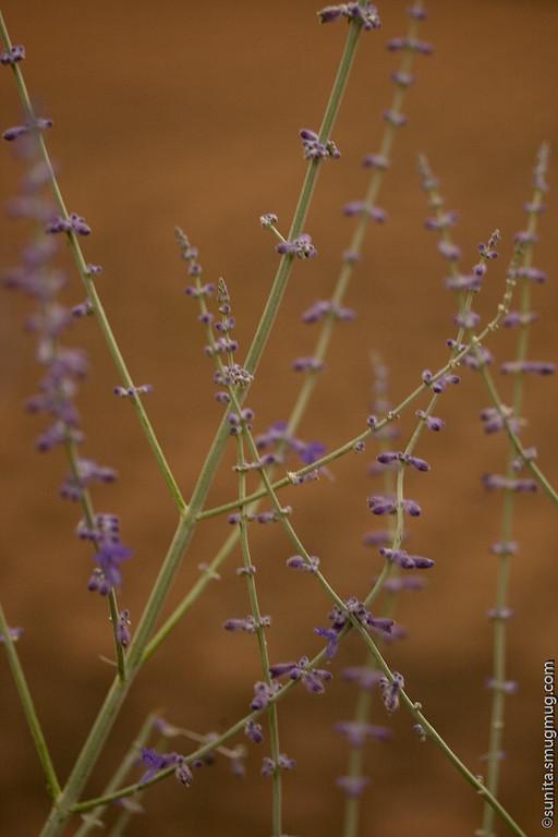 June 21 2008 <br /> <br /> Pretty in purple