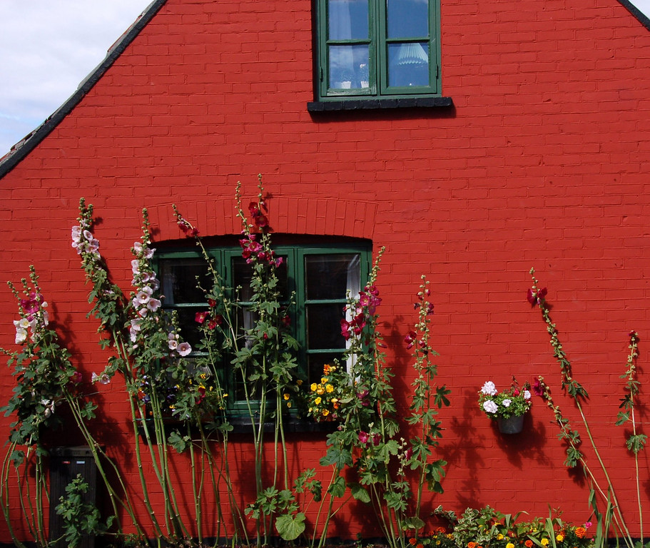 July 9 <br /> <br /> Danish delight!<br /> <br /> A lot of the Danish houses/apartments have small gardens outside their windows with hibiscus flowers of all sizes and colors in full bloom! They made for very pretty pictures, esp. against the contrasting walls.