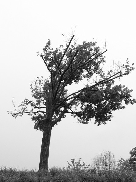 June 19 <br /> <br /> Struggling to cope <br /> <br /> I've often wondered about this tree - It's been like this for several months now, despite losing one side of its branches. Seems like quite a fighter. I suspect it will be taken down soon, though. Poor thing.