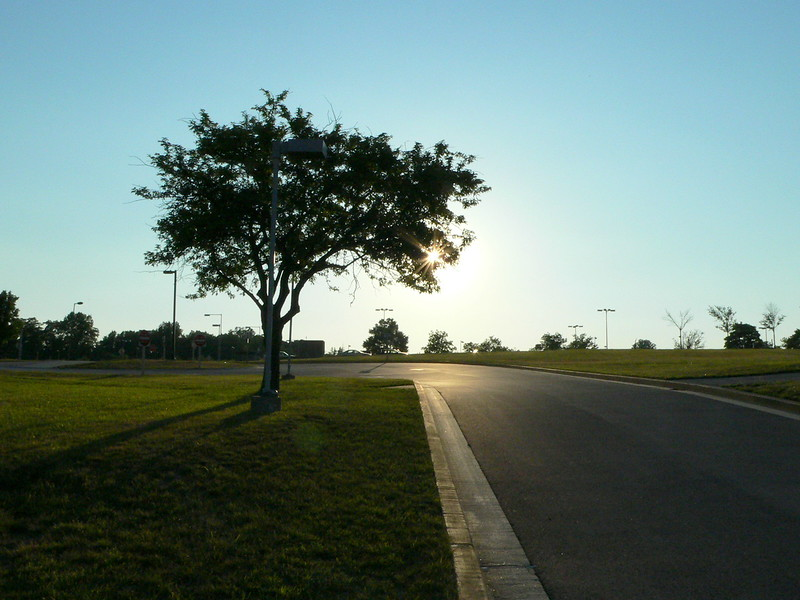 June 23 <br /> <br /> Evening light <br /> <br /> I walk by this tree every evening on my way to the parking lot. If not for the lamp posts all around it, it would make for a lovely lonely tree shot!