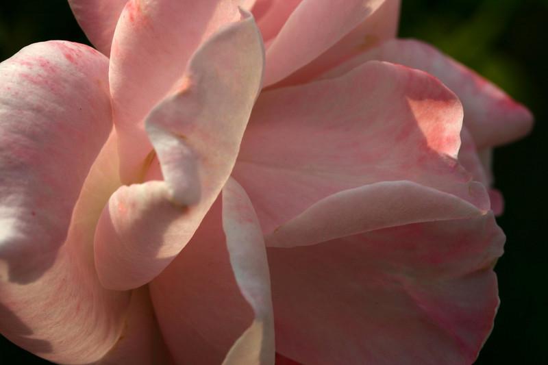 Sep. 26 2007 <br /> <br /> Rose