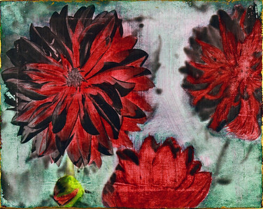 Red Flowers - 2