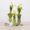 Daffodil Glass Vase Collection- Main Image