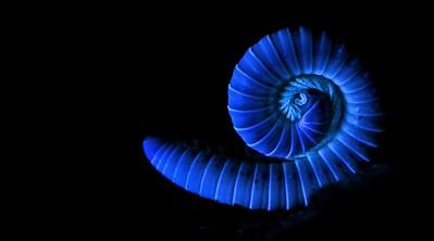 Millipede under UV light