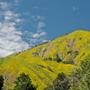 The lush green/yellow growth on the hills almost glows.