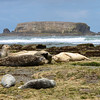 Seals resting at low tide near Otter Creek.