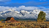 Barn on Morman Row<br /> Grand Teton NP after first snow of the season.