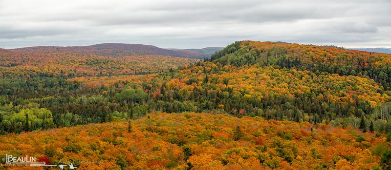 Oberg Mountain Maples